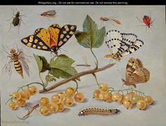 Butterflies and Insects c. 1655 - Jan van Kessel