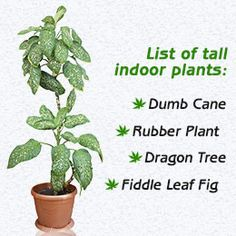 1000 Ideas About Tall Indoor Plants On Pinterest Indoor