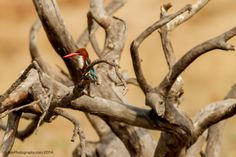 http://www.adephotography.com/PhotoTours/India-TigerTour