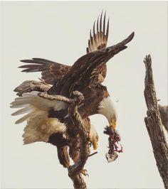 Fotos do Concurso do Smithsonian - Chongas - Informação com bom humor.