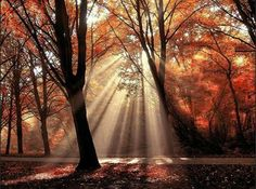 Our new purchase for the living room.Dressed To Shine by Lars van de Goor Beautiful sunlight through autumn trees Types Of Photography, Autumn Photography, Learn Photography, Photography Ideas, Beautiful World, Beautiful Places, Beautiful Pictures, Beautiful Scenery, Photo Tree