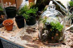 Google Image Result for http://www.blogcdn.com/www.shelterpop.com/media/2010/04/terrarium-plants-pot-dirt-590rr040810.jpg