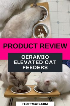 Curious about using an elevated cat feeder for your furry friends? Read this review on this ceramic elevated cat feeder so you can decide if it is the best fit for your cats. Cat Feeding Station, Cat Presents, Best Cat Litter, Cat Food Brands, Best Cat Food, Cat Feeder, Cat Products, Cat Scratcher, Cat Treats
