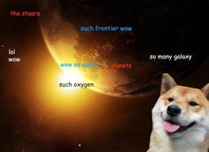 Such doge exploration. Much funny. LOL laugh.