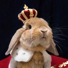 """Así es el conejo con más """"rollo"""" del momento. #conejo #rabbit #hipster #disfraz #cool"""