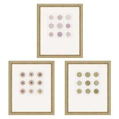 Paragon Decor Sea Urchins Framed Wall Art - Set of 3 - 7832