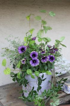 Container Gardening, Backyard, Purple, Plants, Patio, Backyards, Flora, Container Garden, Plant