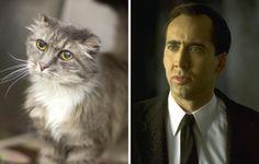 27 Cats That Look like Something Else - BlazePress