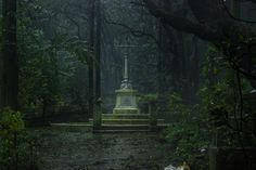 Parsi cemetery in dense forest.