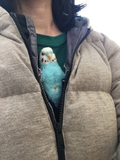 A startled budgie revealed wearing his Human Infiltration Suit. Funny Birds, Cute Birds, Pretty Birds, Beautiful Birds, Cute Little Animals, Cute Funny Animals, Funny Cute, Animal Pictures, Cute Pictures