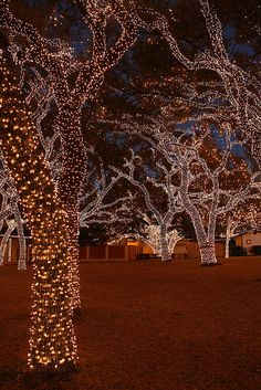 Lights are Bright in Texas | Flickr - Photo Sharing!