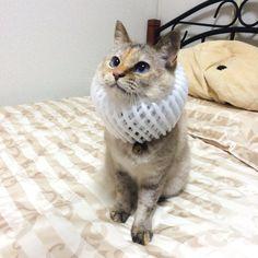猫の画像で癒やされたい!!
