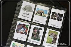 Jungle animal cards