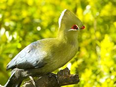 Knysna Loerie Knysna, Garden Route, Bird Watching, Beautiful Gardens, South Africa, Paradise, Birds, Tours, Beach