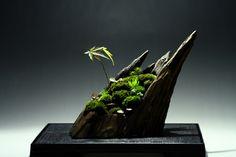 thebeautyoftheplanetearth: Bonsai by kachikoh