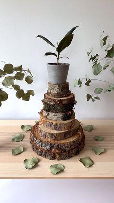 Stone Planters, Modern Planters, Large Planters, Concrete Planters, Hanging Planters, House Tree Plants, Trees To Plant, Plastic Plant Pots, Rubber Plant