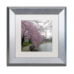 "Trademark Art ""Washington Blossoms"" by CATeyes Framed Photographic Print Size: 1"