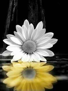 Splash Photography, Nature Photography, Sunflower Iphone Wallpaper, Sunflower Pictures, Black And White Pictures, Nature Wallpaper, Nature Pictures, Pretty Pictures, Aesthetic Wallpapers