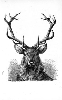 Love the antlers. I'm in such a stag mood lately