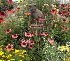 Summer display in our perennial house. Perennials, Display, Bird, Garden, Plants, Summer, House, Animals, Floor Space