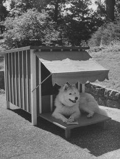 Dog house with shading.
