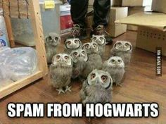 Spam from Hogwarts.