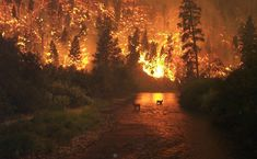 Amazing pic of a wildfire with animals in the foreground.