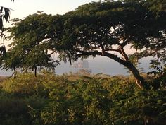 Join an inspiring project helping with conservation volunteering in the Galapagos. Spend 1 - 3 weeks preserving fauna and flora on a stunning island. Galapagos Islands, Gap Year, Stunning View, Conservation, Flora, Rock, Sunset, Outdoor, Outdoors