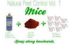 Natural #Pest Control for #Mice : camper and house idea