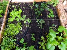 How to build your own square foot garden
