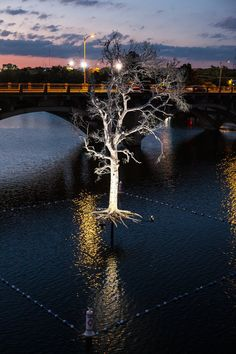 'Thirst,' a collaborative creation in Austin by Beili Liu, Emily Little, Norma Yancey & Cassie Bergstrom supported by a commission from Women & Their Work. Photo: Ben Aqua, for Women & Their Work. A memorial to the more than 300 million trees lost in the Texas drought of the last few years.
