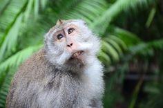 Ubud - Forêt des singes et temple