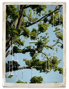 Swings- Looks like fun :-)