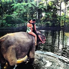 The Elephant Safari Park & Lodge   Instagram Photos and Videos   instidy.com - Instagram Online Viewer