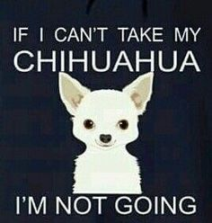 Chihuahuas: If I Can't Take My Chihuahua I'm not going.