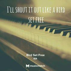 Sia- Birds Set Free Sia Lyrics, Free Lyrics, Alive Lyrics, Bird Set Free, Music Jokes, Sweet Quotes, Sweet Sayings, Beautiful Lyrics, Love Truths