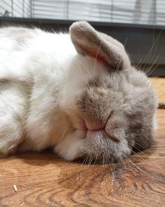 Asi deberias estar tú,gordita 🙄 Cutest Animals On Earth, Cute Baby Animals, Animals And Pets, Funny Animals, Adopt A Bunny, Beautiful Rabbit, Easy Pets, Cute Bunny, Fur Babies