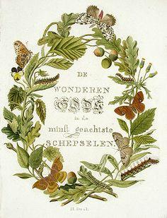 Jan Christiaan Sepp Butterflies and Moths Antique Prints 1762