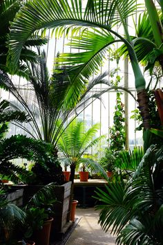 Victorian Conservatory at Kew Gardens London http://raisinheart.com/2014/09/kew-gardens-london/