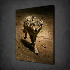 LONELY WOLF CANVAS PRINT PICTURE WALL ART FREE FAST UK DELIVERY