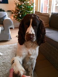 "Click visit site and Check out Cool ""English Springer Spaniel"" T-shirts. This website is top-notch. Tip: You can search ""your name"" or ""your favorite shirts"" at search bar on the top."