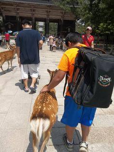 あめりか日記: 2013 夏 日本で <奈良の鹿>