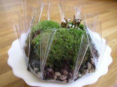 this is a cute terrarium.