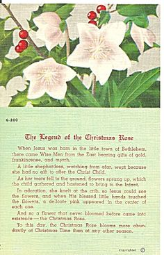 Pretty vintage linen postcard, The Legend of the Christmas Rose. Great old vintage card to frame and to tuck into a Christmas gift basked for Christmas Poems, Meaning Of Christmas, Christmas Rose, 12 Days Of Christmas, Christmas Music, Christmas Activities, A Christmas Story, Christmas Printables, Christmas Pictures