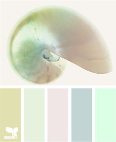 shelled tints - LOVE this!!