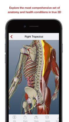 A better way to understand health and the human body. The BioDigital Human is the most comprehensive set of true 3D anatomy and health condition models ever assembled