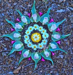 Mandala with nature