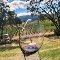 We take you on a wine tour from the comfort of your home.We bring the wine to you. Find out how our Wine Subscription Box works... #winelovers #wines #WineLoversBox #wine #winetasting #wineandfood Wine Subscription, Gifts For Wine Lovers, Wine Tasting, White Wine, Wines, Wine Glass, Vineyard, Alcoholic Drinks, Best Gifts