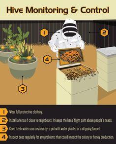Backyard Bee Keeping: Maintaining a Beehive