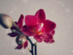 Cbus52: Columbus in a Year: Little Orchid